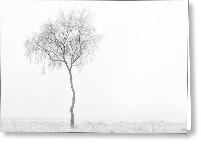 Lonely Birch Tree Greeting Card
