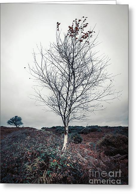 Lonely Birch Tree Greeting Card by Svetlana Sewell