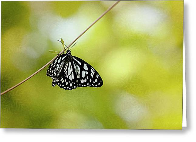 Lonely Butterfly  Greeting Card by Maria Angelica Maira
