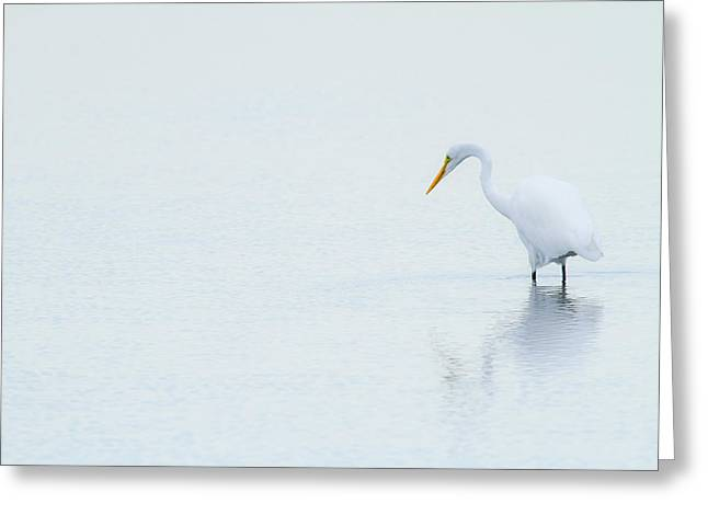 Lonely Egret Greeting Card by Karol Livote