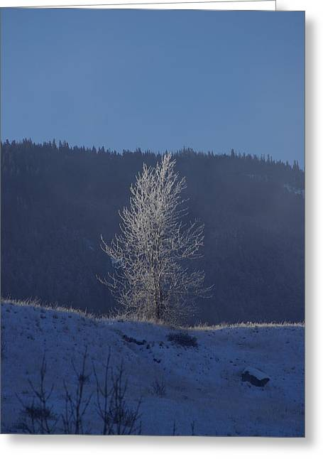 Lonely Frosty Tree Greeting Card
