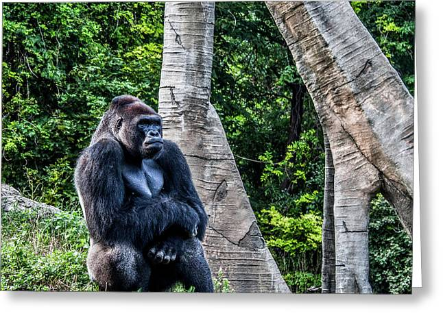 Greeting Card featuring the photograph Lonely Gorilla by Joann Copeland-Paul