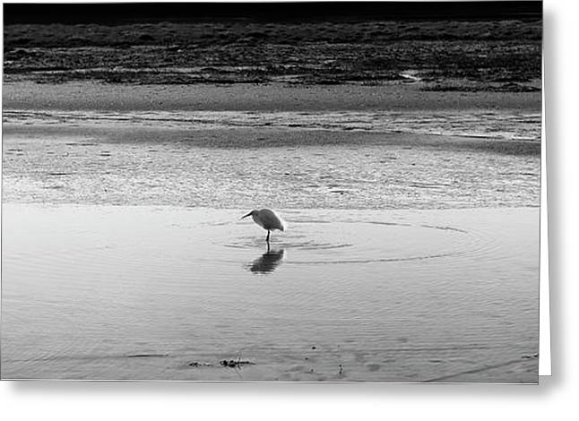 Greeting Card featuring the photograph Lonely Heron by Nicholas Burningham