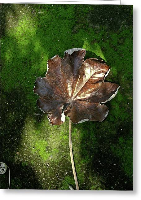 Lonely Leaf On Moss Greeting Card