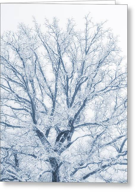 lonely Oak tree in snowy, misty landscape Greeting Card by Christian Lagereek