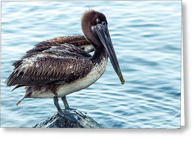 Lonely Pelican Greeting Card