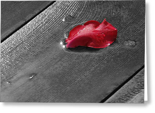Lonely Petal Greeting Card by Marrissia Ruth