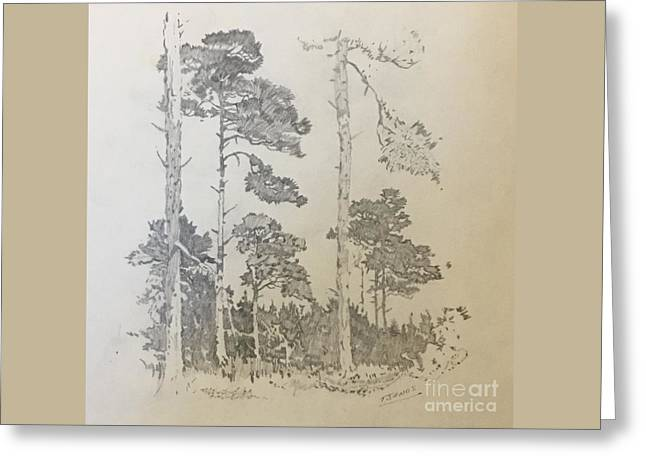 Lonely Pines Greeting Card