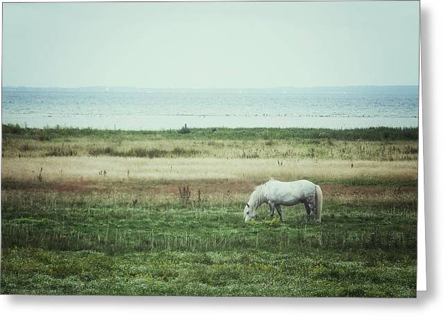 Lonely Pony Greeting Card by Karen Stahlros