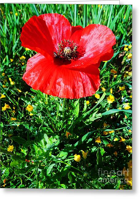 Lonely Poppy Greeting Card