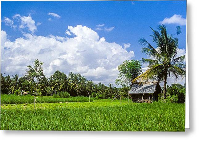 Lonely Rice Hut Greeting Card