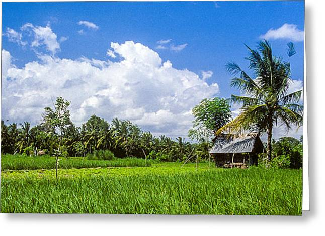 Greeting Card featuring the photograph Lonely Rice Hut by T Brian Jones