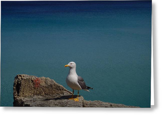 Lonely Seagull Greeting Card