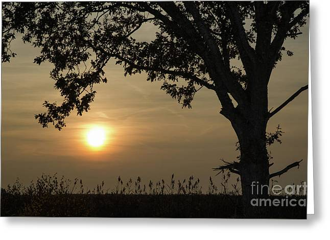 Lonely Tree At Sunset Greeting Card by Kennerth and Birgitta Kullman