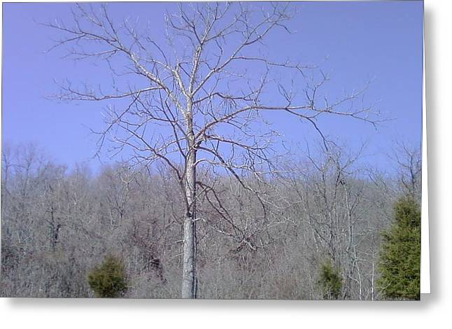 Lonely Tree Greeting Card by Barb Montanye Meseroll
