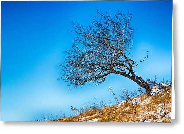 Lonely Tree Blue Sky Greeting Card by Jivko Nakev