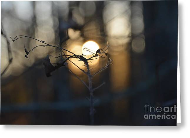 Lonely Tree Branch With Bokeh Love -georgia Greeting Card