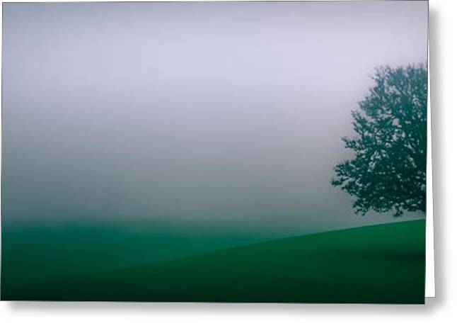 Lonely Tree In The Fog Greeting Card by Don Schwartz