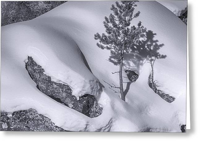 Lonely Tree In Yellowstone Greeting Card by Peg Runyan