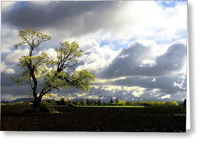 Lonely Tree Is The Summer Greeting Card