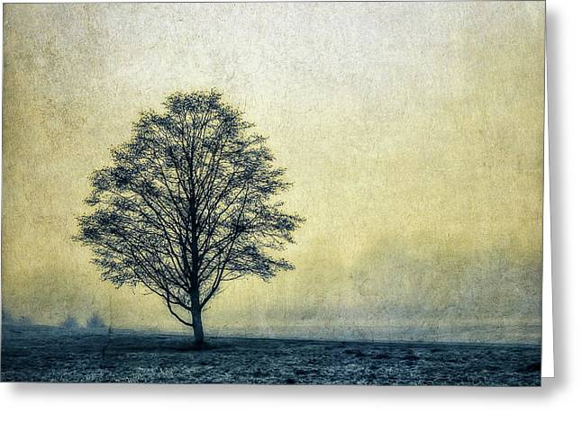 Greeting Card featuring the photograph Lonely Tree by Marion McCristall