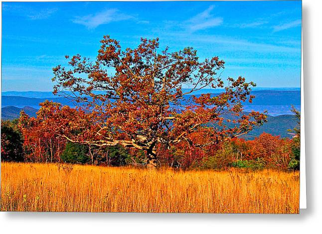 Lonely Tree Skyline Drive Va Greeting Card by The American Shutterbug Society
