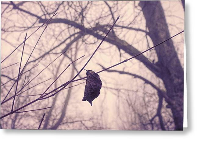 Lonely Winter Leaf Greeting Card by Antique Images
