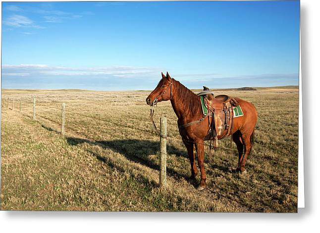 Lonesome Horse Greeting Card