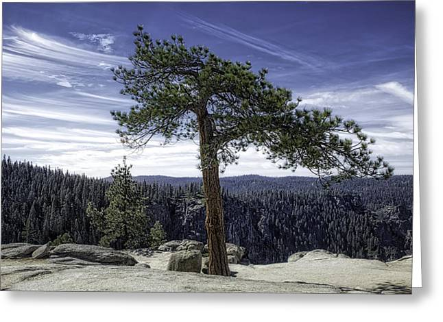 Lonesome Tree Greeting Card
