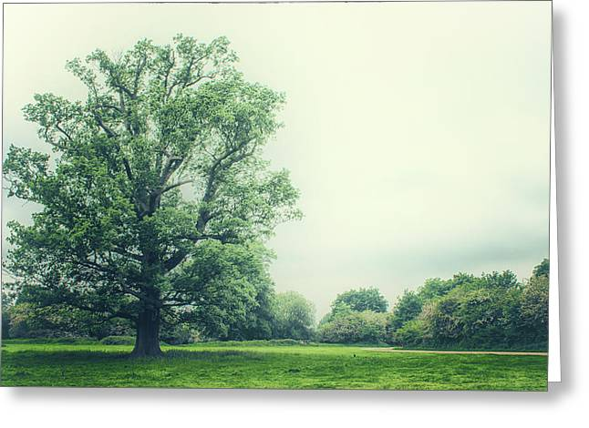 Lonesome Tree Greeting Card by Martin Newman