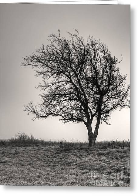 Lonesome Tree Greeting Card by Tamyra Ayles