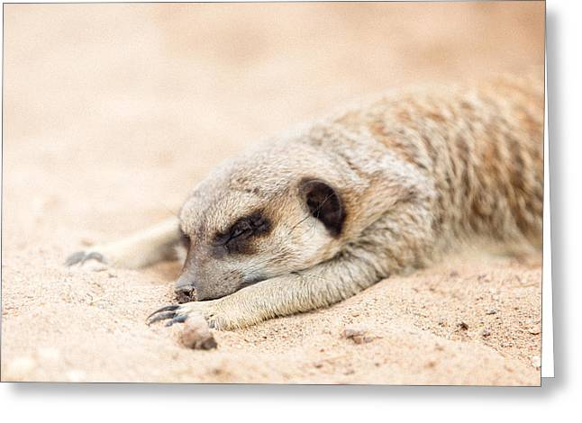 Long Day In Meerkat Village Greeting Card