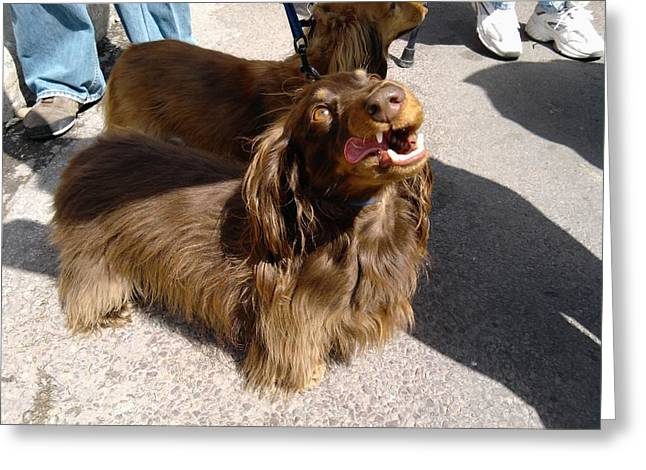 Long Haired Dachshund Making A Face Greeting Card