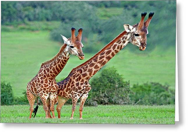 Long Necks Together Greeting Card by Bruce Iorio