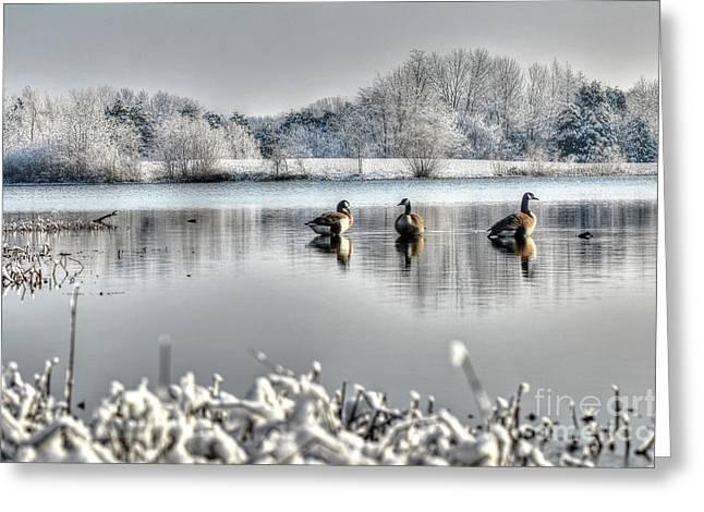 Geese At Long Run Pond Greeting Card