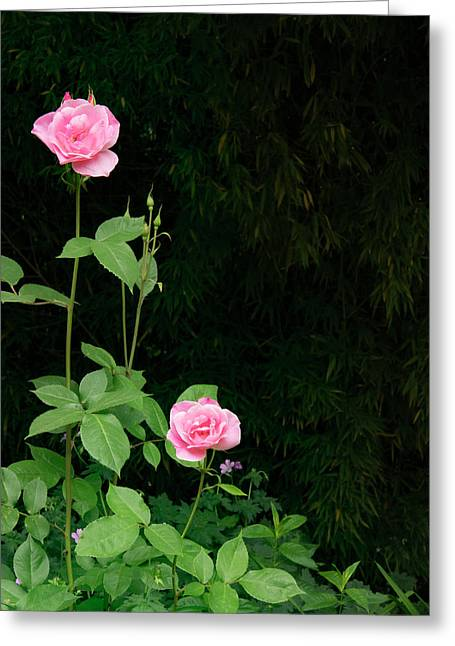 Long Stemmed Rose Greeting Card by Jean Noren