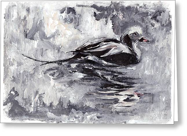 Long-tailed Duck Greeting Card