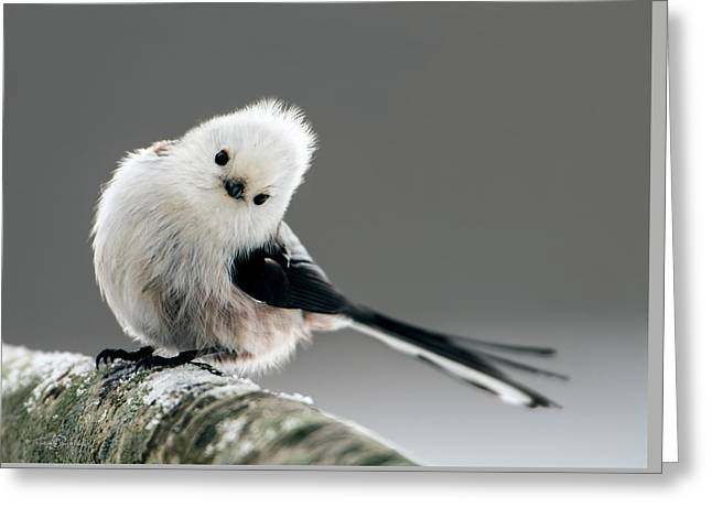 Charming Long-tailed Look Greeting Card