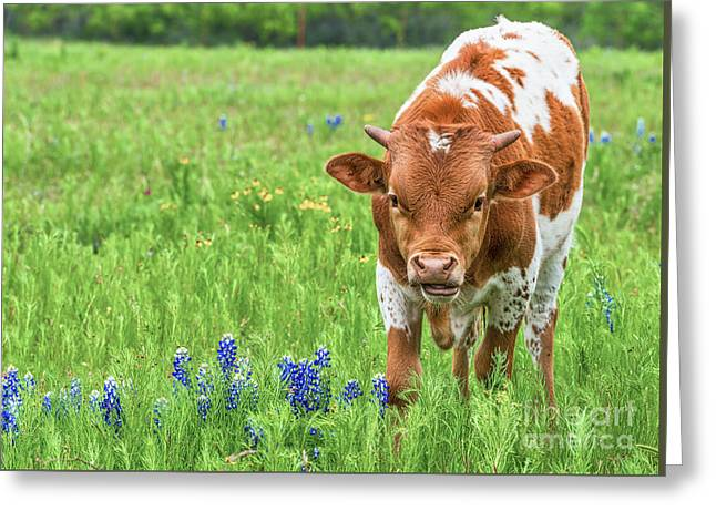 Longhorn Calf In Wildflowers Greeting Card by Tod and Cynthia Grubbs