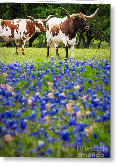Longhorn Duo Greeting Card by Inge Johnsson