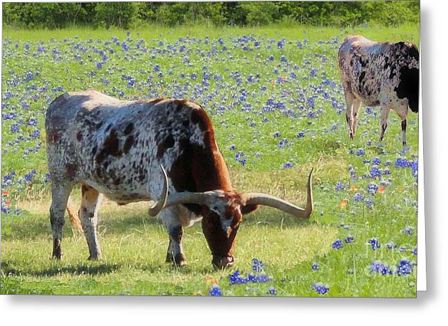 Longhorns In The Bluebonnets Greeting Card by Janette Boyd