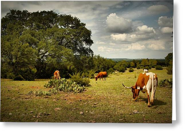 Longhorns Of Texas Greeting Card by Linda Unger