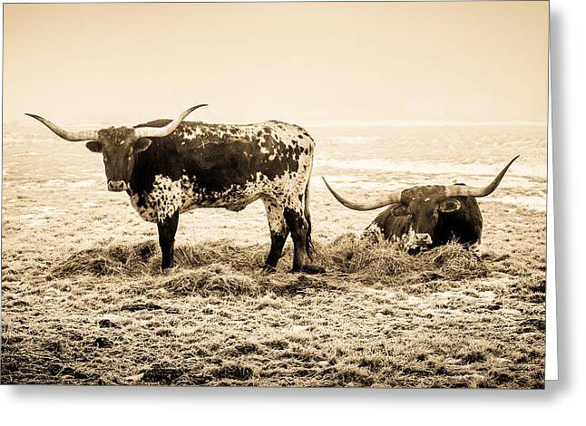 Longhorns Greeting Card