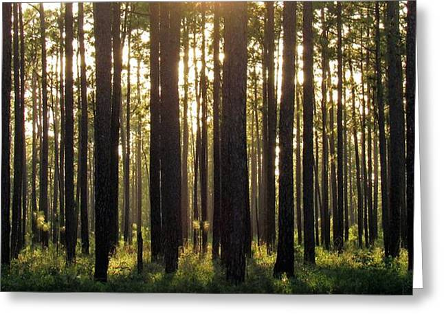 Longleaf Pine Forest Greeting Card