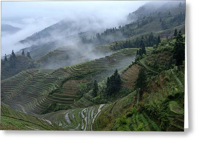 Longsheng Rice Terraces Greeting Card by Michele Burgess