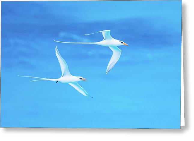 Longtail Dream Team Greeting Card