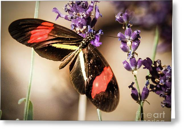 Longwing Butterfly Greeting Card by Robert Bales