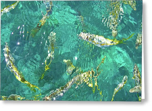 Looe Key Reef Greeting Card by Charles Harden