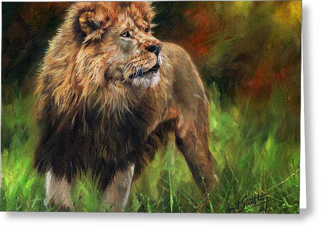 Look Of The Lion Greeting Card by David Stribbling