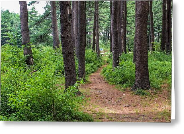 Look Park Nature Path Greeting Card